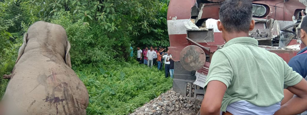 The critically injured jumbo helplessly dragged itself out from the railway tracks in north Bengal on Friday morning