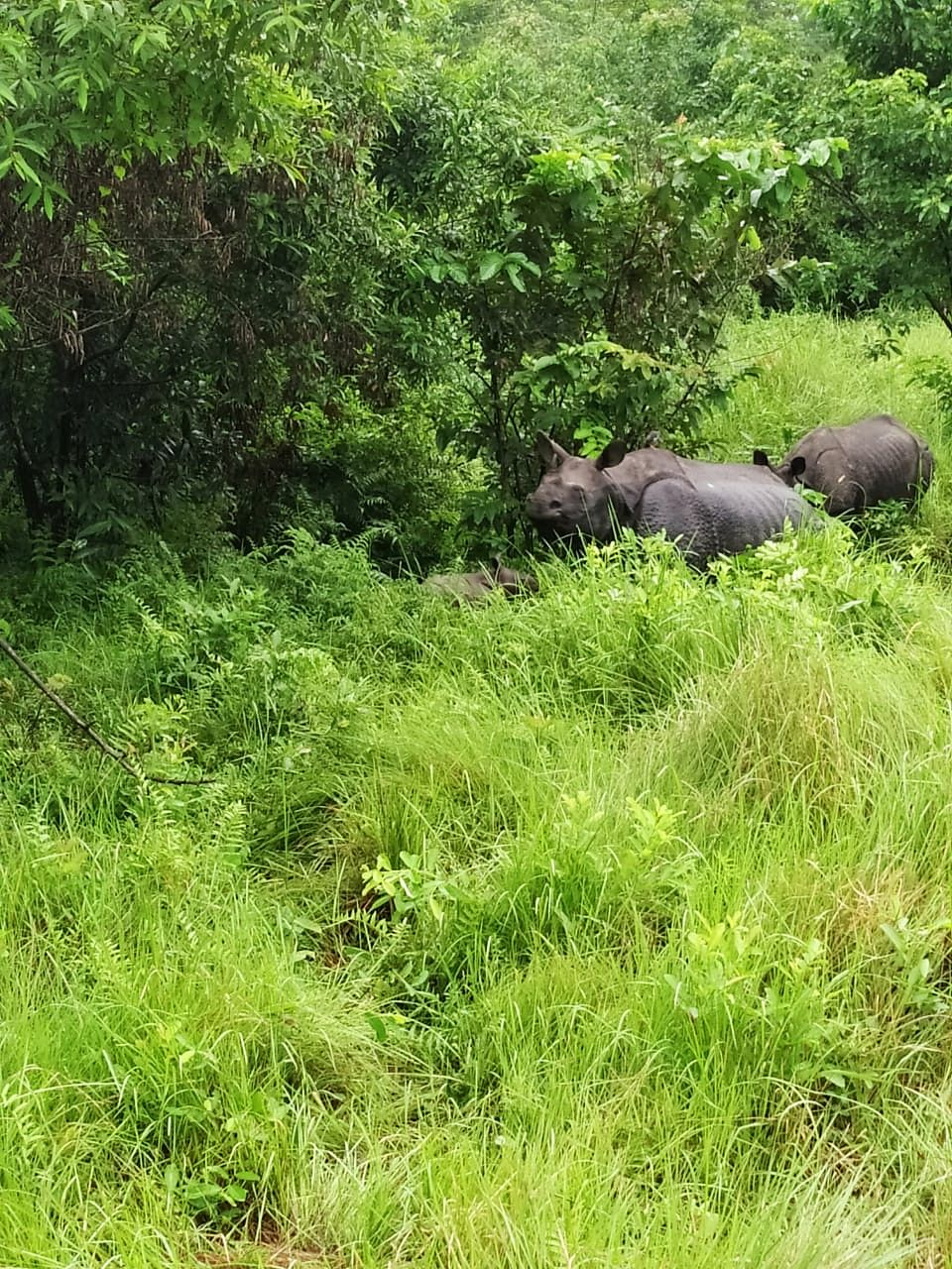 With the birth of a new calf, the total number of rhinos at Manas National Park has increased to 40