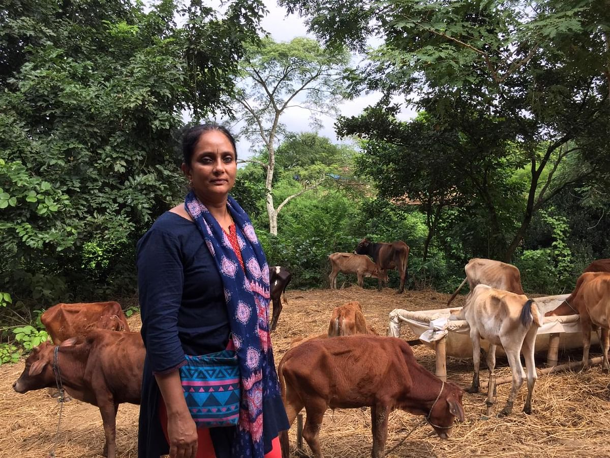 Lata Rajan, in-charge of the Devipur cattle shelter in Tripura's Sepahijala district