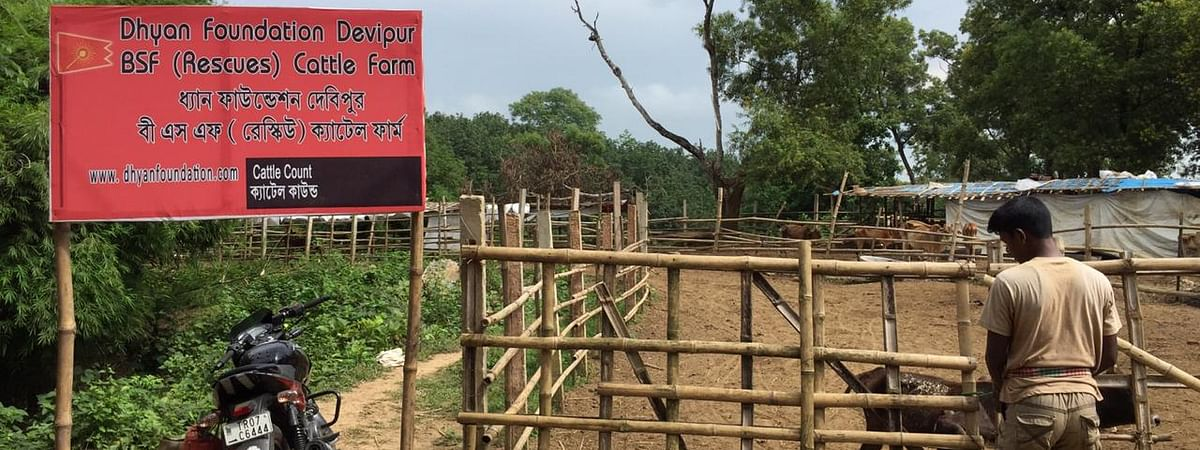 Delhi-based NGO Dhyan Foundation has been running the cow shelter in Sepahijala after an agreement with the state govt to house animals seized from border outposts