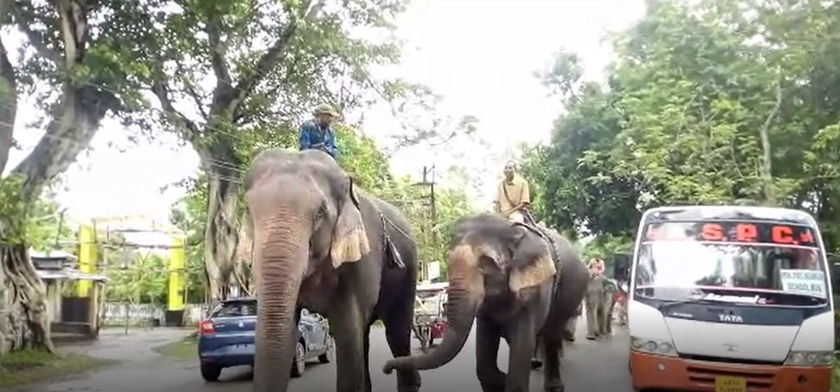 Five captive elephants took part in the wildlife awareness rally at Sonitpur