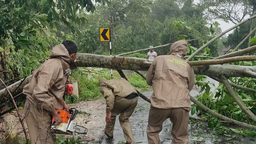 Tress uprooted in Odisha due to Cyclone Bulbul