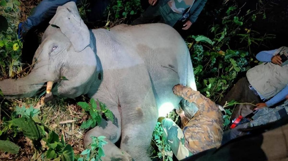 North Bengal: The new arena of man-elephant conflict in India