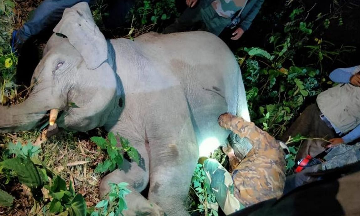 Forest officials treating an elephant calf after it was hit by a speeding car on Asian Highway 2 near Bagdogra in West Bengal's Darjeeling district