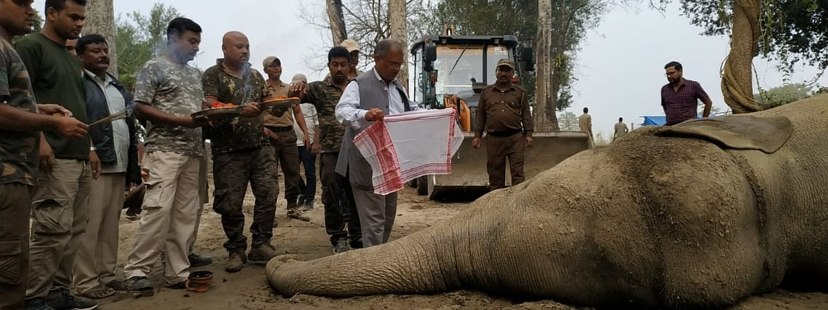 After a week of being tranquilized and captured by forest officials, Laden aka Krishna died at Orang National Park in Assam on Sunday after a cardiac arrest
