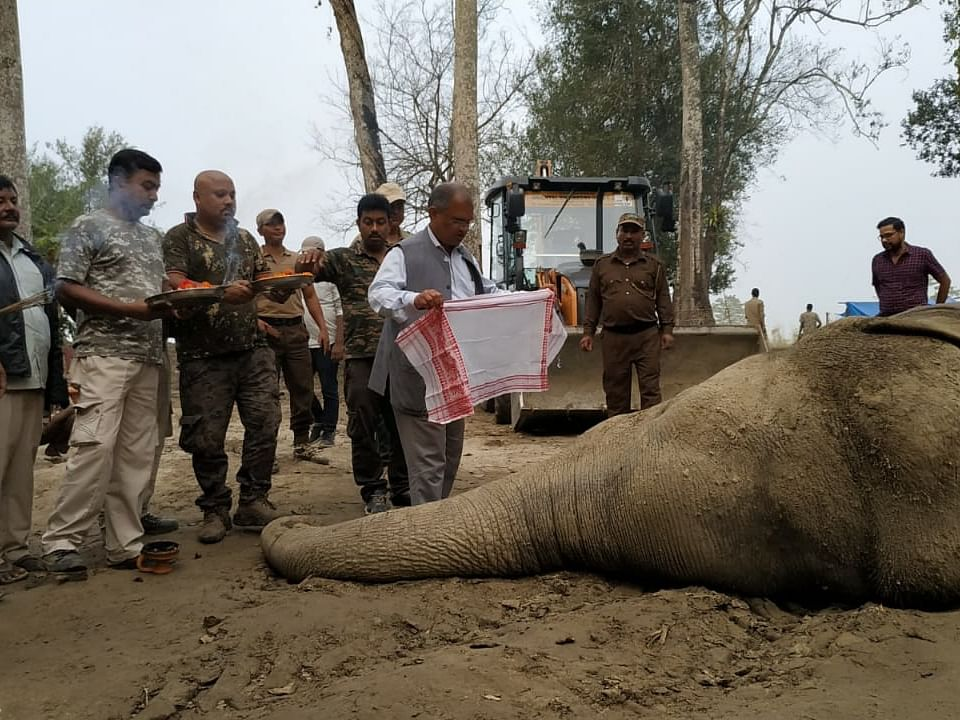 Tranquilizer overdose suspected in death of Assam elephant 'Laden'