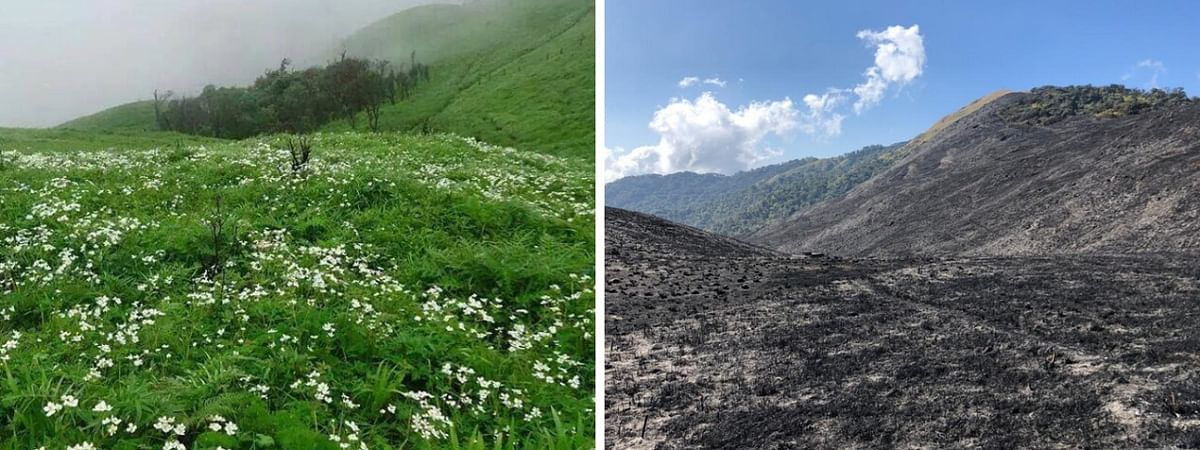 Shirui Peak in Manipur, before (left) and after the wildfire