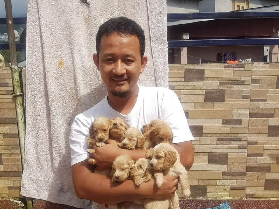 How this Sikkim man is helping street dogs survive freezing cold