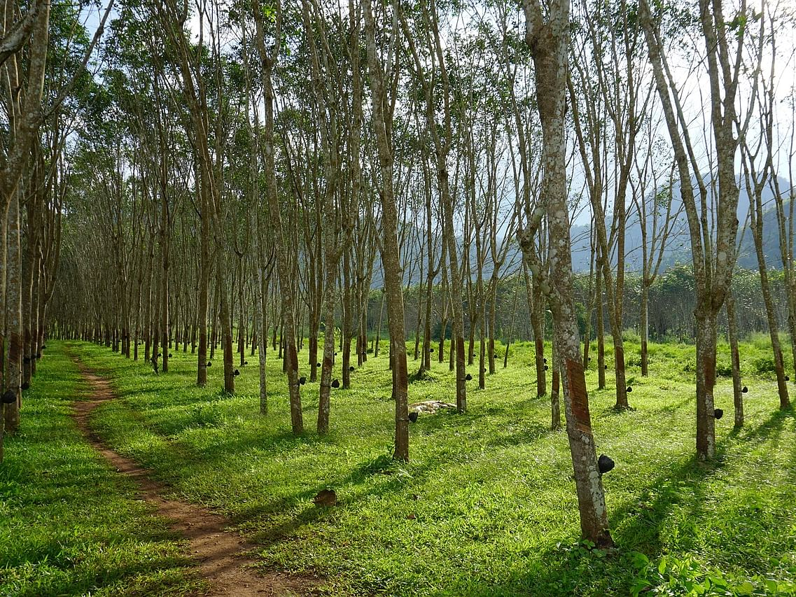 Tripura Cabinet approves policy for development of  forest produce