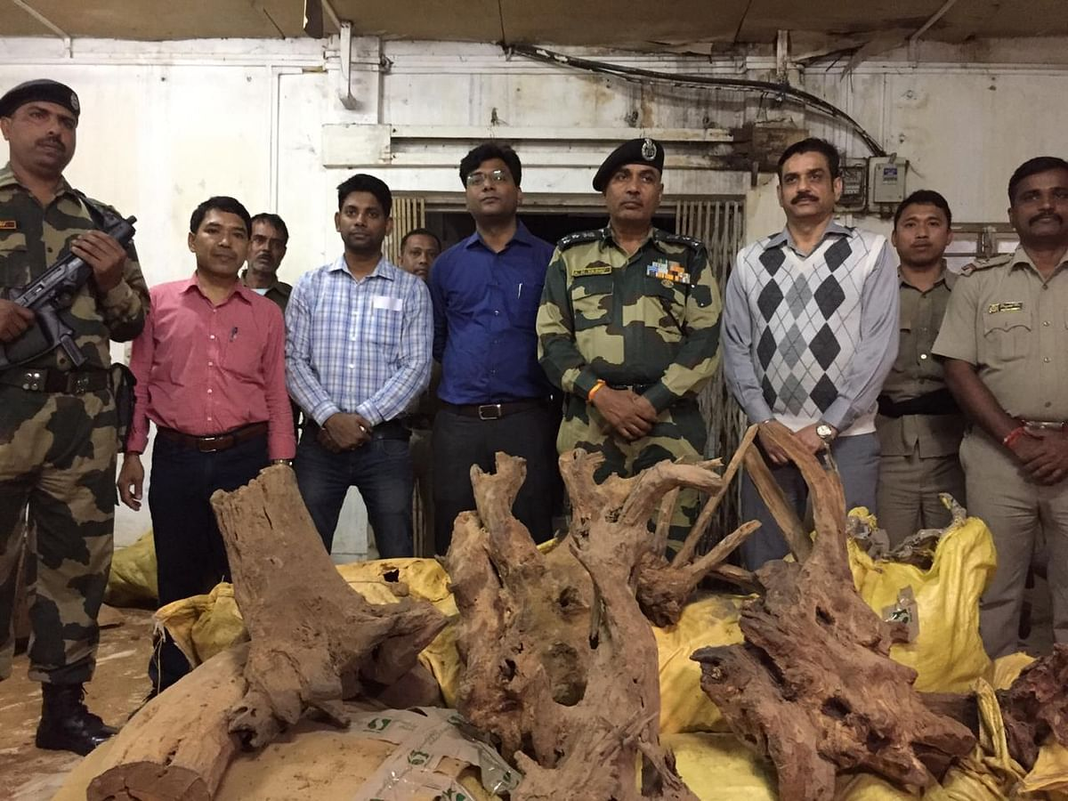 8,000 kg sandalwood worth over Rs 24 crore seized in West Tripura