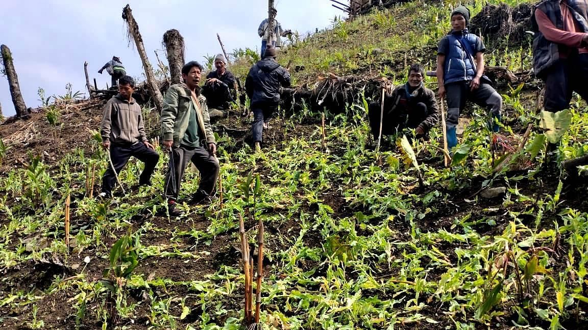 The non-registration of cases against the cultivators in the past, owing to poor economic condition of farmers, had been a setback in curbing poppy cultivation
