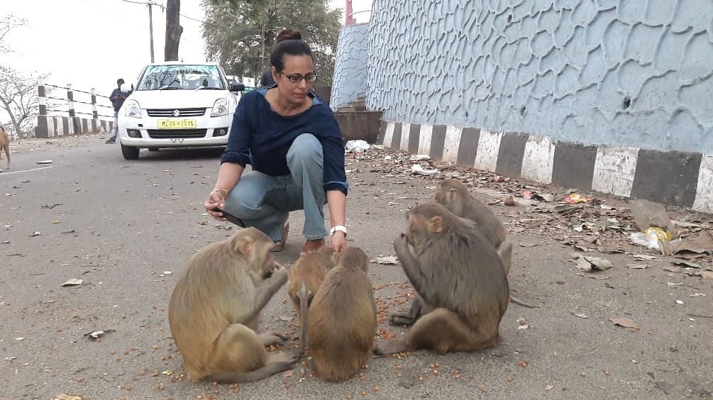PHOTOS | COVID19: Assam woman ensures animals don't remain hungry