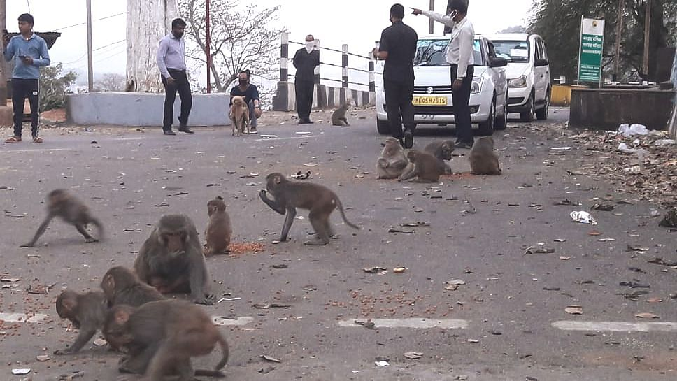 The national lockdown amid coronavirus pandemic didn't just take a toll on humans --animals too were at the receiving end. In order to provide them some relief, Ashma Begum has been taking to the streets of Guwahati in Assam on a regular basis