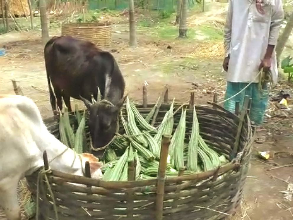 How COVID-19 lockdown is forcing Assam farmers to dump harvest