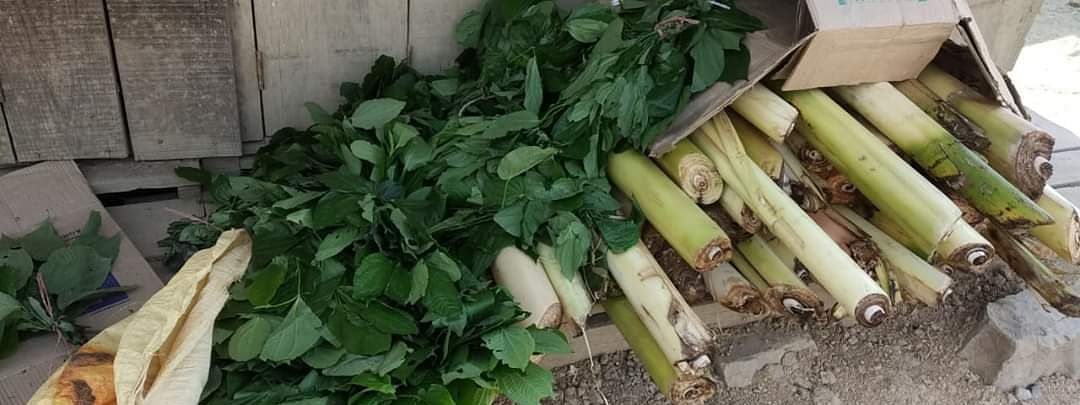 Banana trees and wild vegetables collected from farms at Halang village in Manipur that are to be distributed among fellow villagers