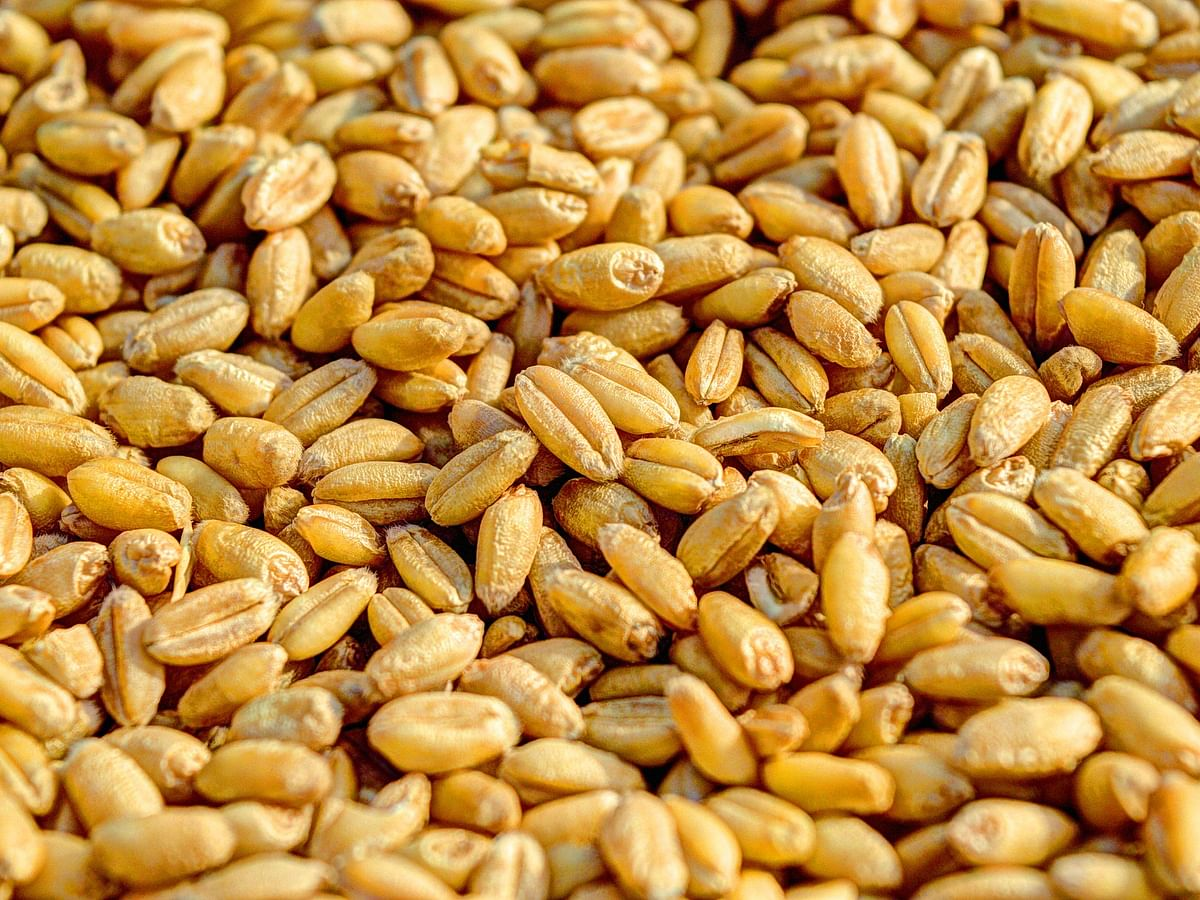 COVID19: FCI dispatches 10 million tonnes of grains to meet supply