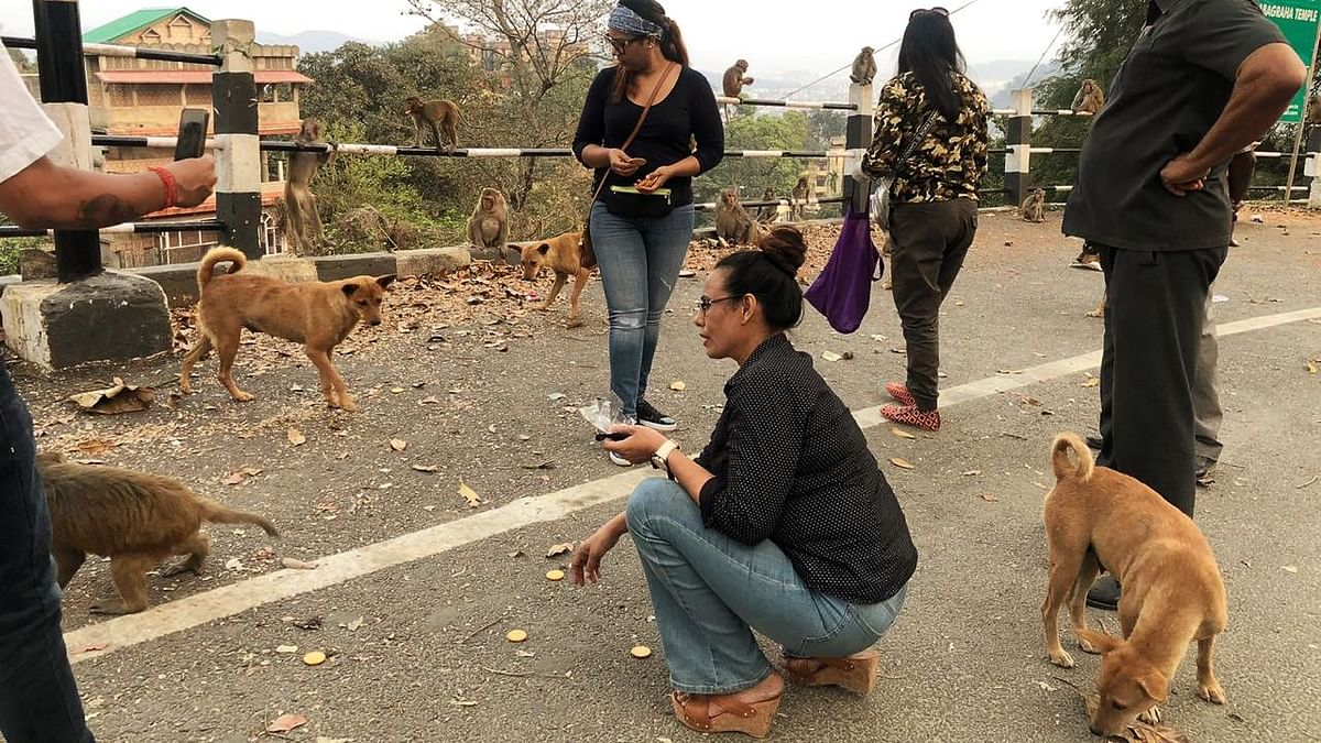 'Stray animals depend on people and shops for food. Since the lockdown has been imposed, they do not have any place to go. So, with the help of district administration, I am trying to feed as many of these animals as I can. I will continue to do it as long as the lockdown is imposed,' Ashma said