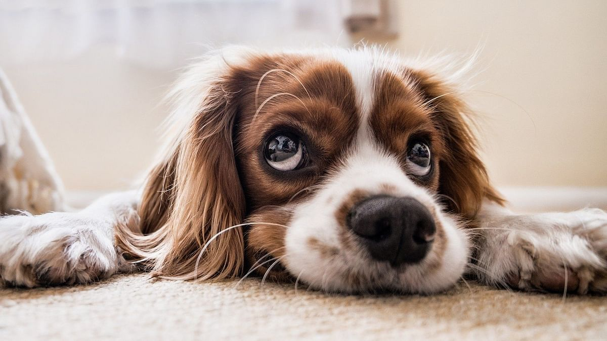 Lockdown guide to pet care: How to keep pets relaxed & entertained