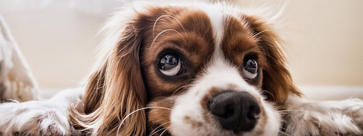 With the sudden change in your daily routine, your pets might find it difficult to adjust in the new lifestyle