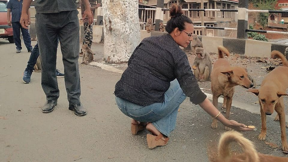 "'I appeal to the people of Guwahati to come forward and feed the stray animals. They can leave the food outside their homes and hang it to their gates and we can collect it from there. This way, we can avoid any contact and follow the precautionary measures while helping the animals,"" Ashma said"