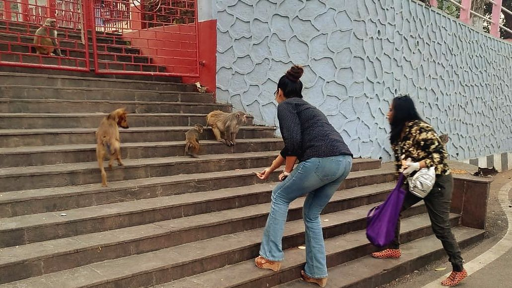 Ashma  also visited Nabagraha temple that houses a large population of monkeys