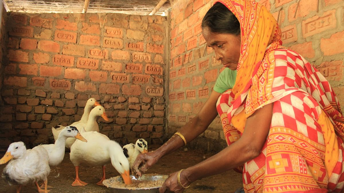 Monowara Begam was already rearing ducks on a small scale but with some technical training and visioning exercise from SeSTA, she now earns a decent income for her family in Assam's Kamrup district