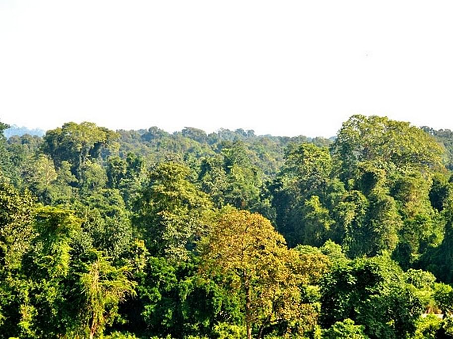 Assam MP writes to Union forest minster to protect Dehing Patkai