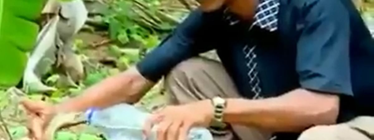 The video clip shows a brave forest officer kneeling down on the ground and offering the cobra some drinking water from a plastic bottle