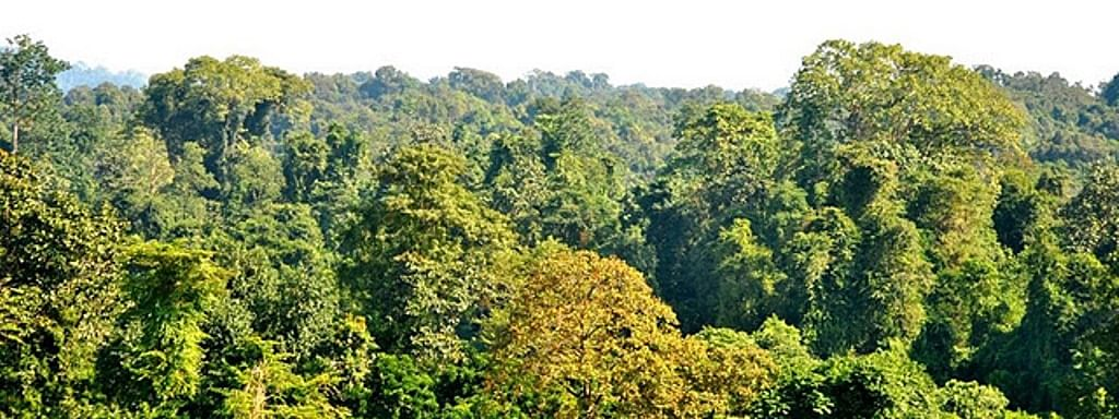National Board for Wildlife (NBWL) last month permitted Coal India Ltd to carry out coal extraction in 98.59 hectares of the Dehing Patkai elephant reserve