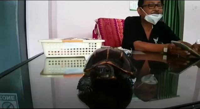 The rare species of turtle is seen on the table of a forest department officer soon after its recovery from smugglers in Chirang district