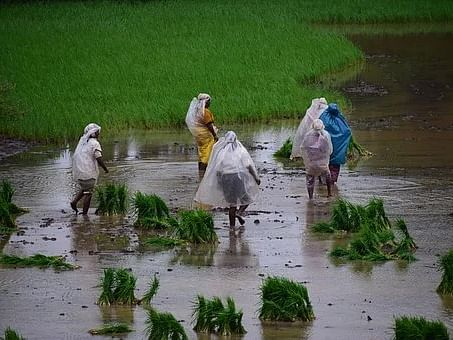 Tripura govt announces 'Fasal Bima Yojana' for 4.42 lakh  farmers