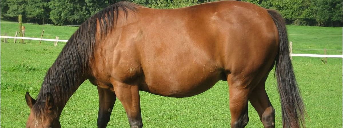 Police took the owner to a medical screening centre while veterinary experts were puzzled on what to do with the horse
