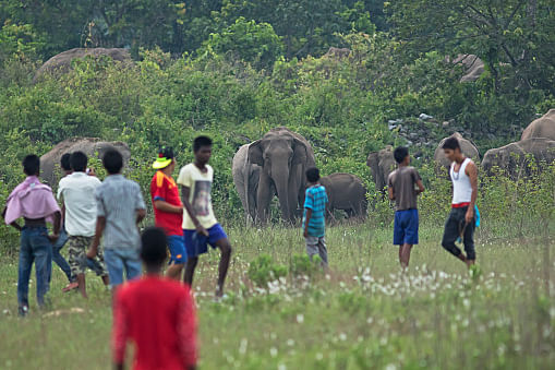 An elephant corridor in Teliamura forest sub-division under Khowai district of Tripura