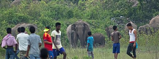 The radio-collared device will provide updates of the real-time locations of the elephant herds and help forest department officials to track their movement