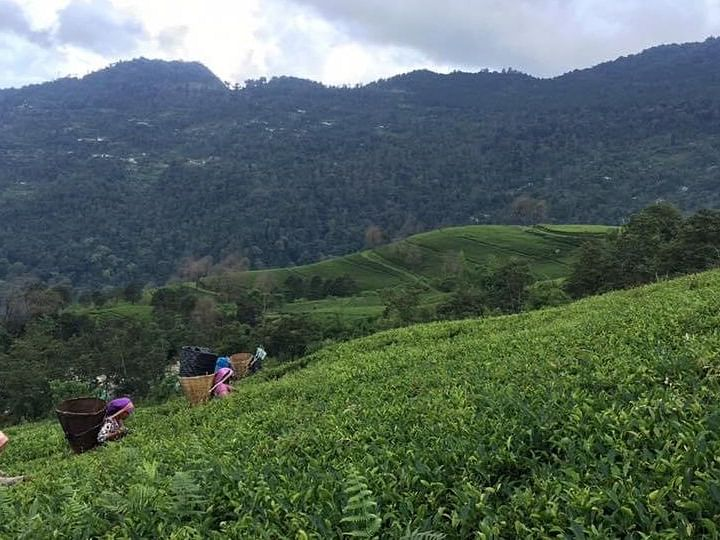 In pictures: For the love of a good cup of Temi Tea ️