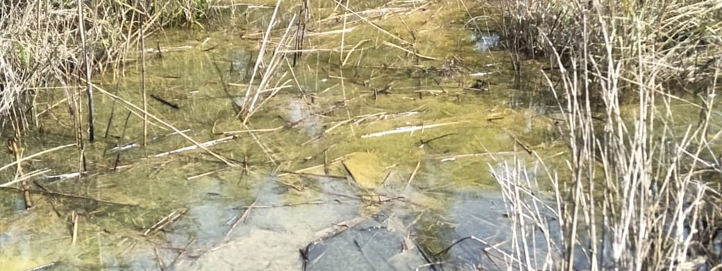 Glimpse of the contaminate portion of a water body near the gas well site