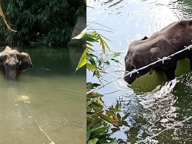 Elephant dies after eating cracker-filled fruit, netizens enraged