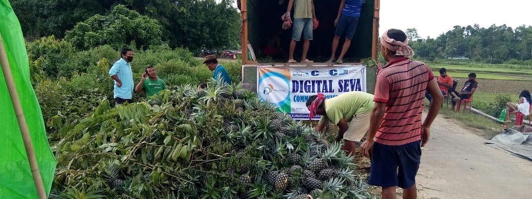 10 metric tons of kew pineapples were transported from Kumarghat to Mumbai by road in a container on Tuesday