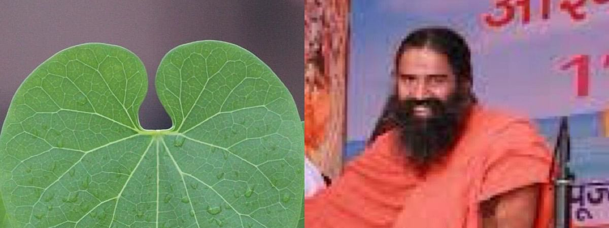 Ramdev says that the highly contagious disease can be treated with giloy and ashwagandha