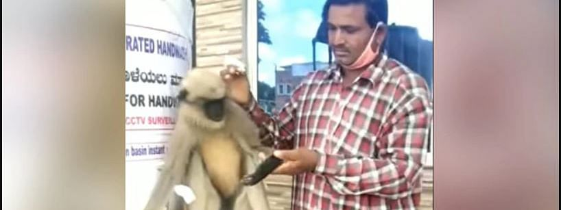 The video further shows two people checking the langur for injuries and applying medicine while the langur patiently sits atop a wash basin.