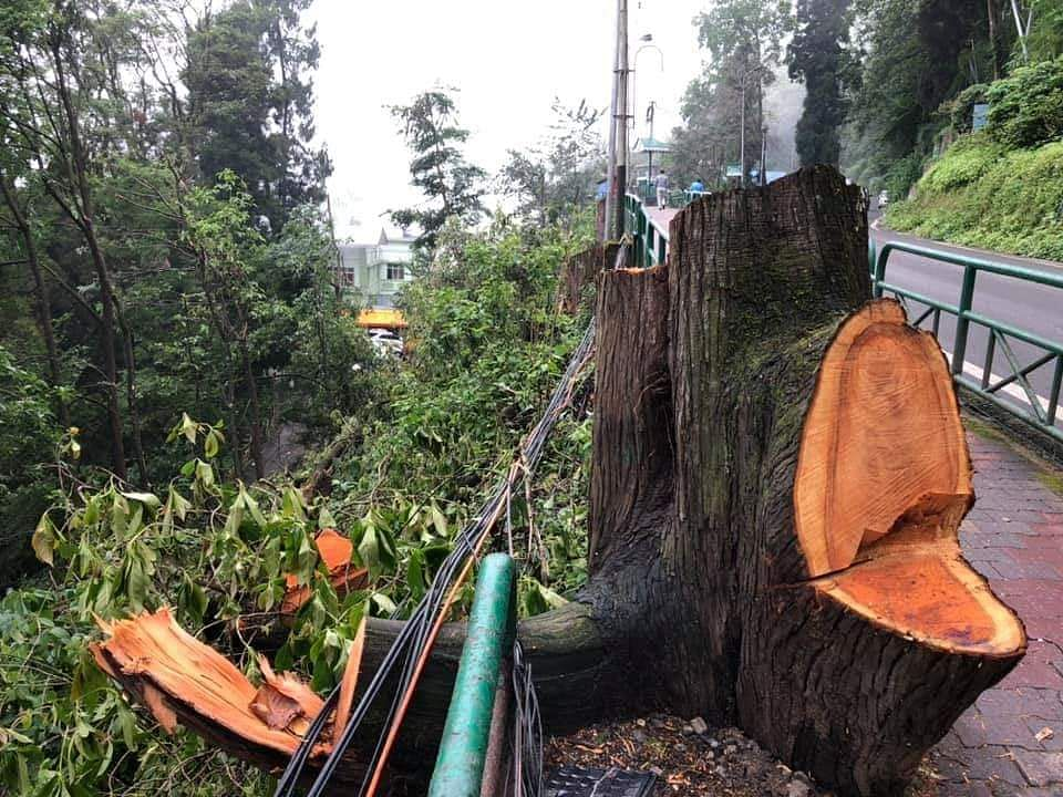There was a lot of uproar among the locals when the Smart City Project opted to cut around 121 trees in Gangtok, in what was previously deemed as a Green Belt Zone