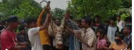 Locals, including children were allegedly parading with the dead body of the leopard in the area