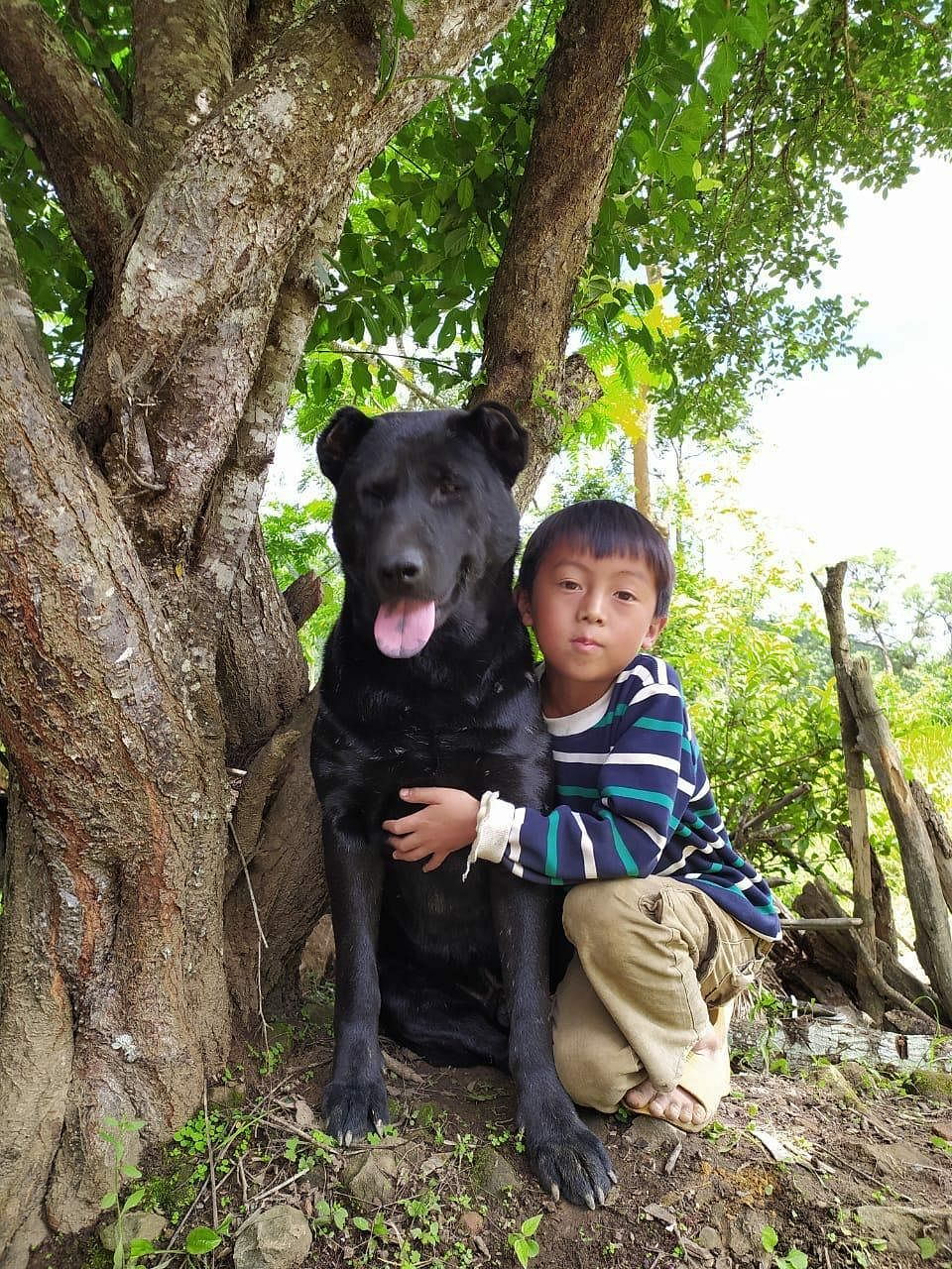 Known as Haofa, a local breed among the Tangkhul community