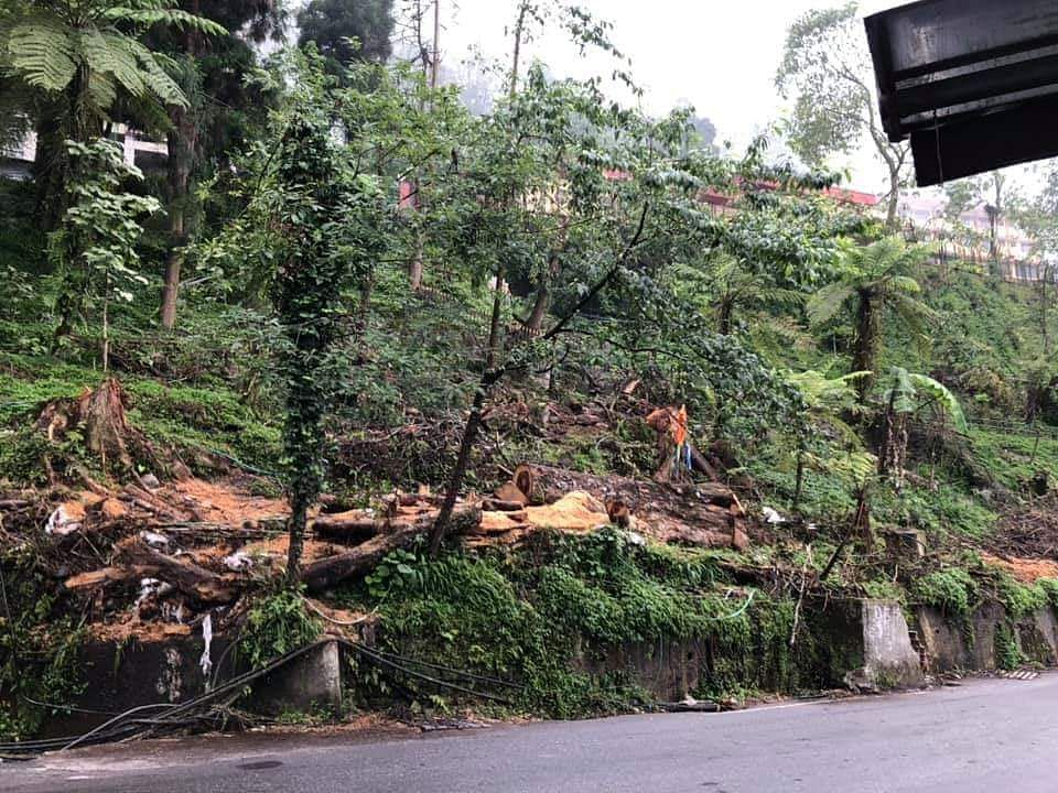 Although the project incorporates sustainable environment a large number of trees have been unfortunately felled on the premise that 10 saplings each would replace each one of the matured trees so felled