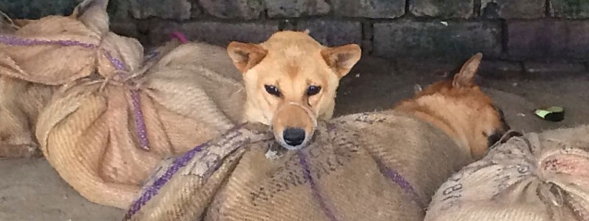 Animal activists have been campaigning against Nagaland for its dog meat consumption