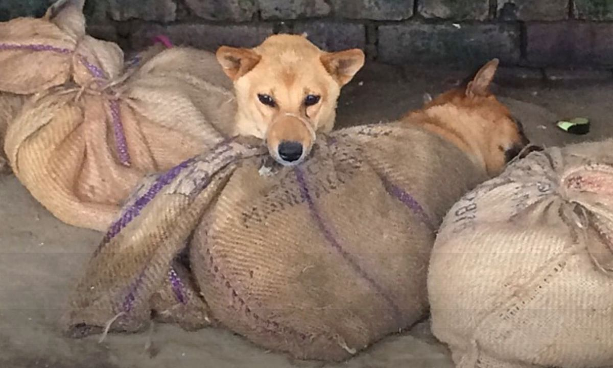 Dog markets and also the sale of dog meat -- both cooked and uncooked -- had been banned