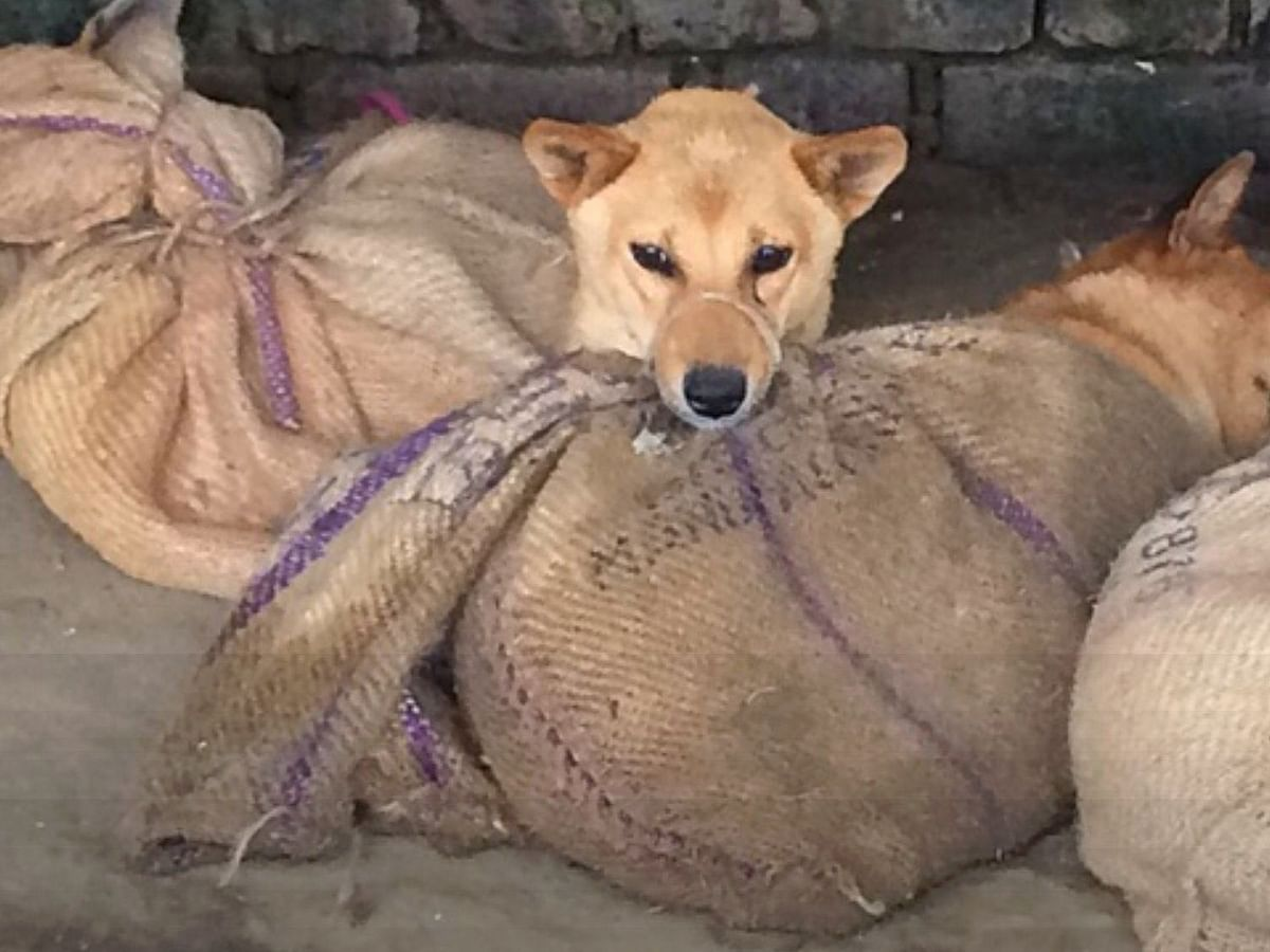Dog meat ban in Nagaland is about showing Naga tribes as uncivilised