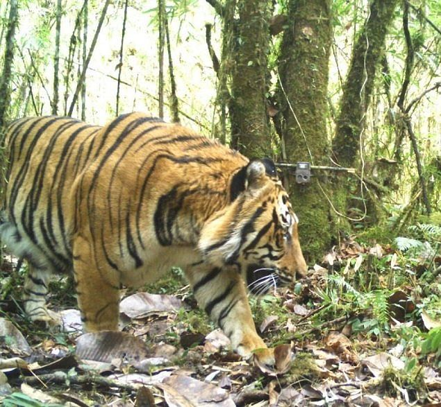 A whopping total of 3,48,58,623 photographs were captured, of which 76,651 were that of tigers