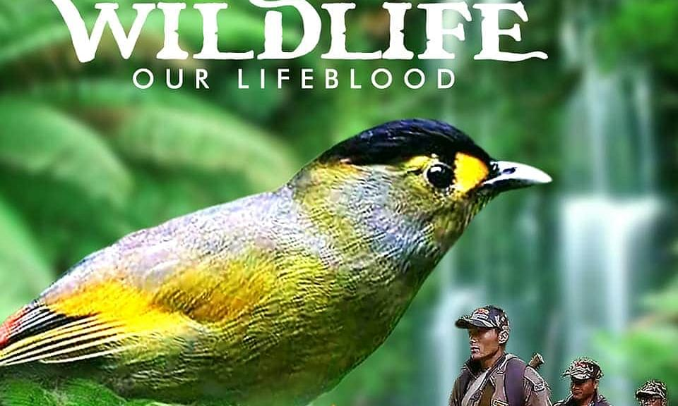 'Wildlife- Our Lifeblood' is the only Indian documentary to be nominated at the Paris festival