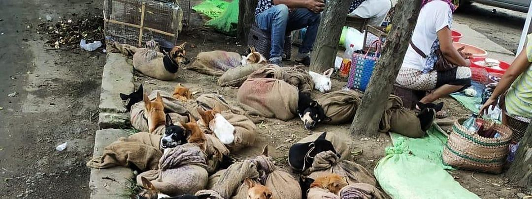Pictures of dogs tied in sacks were circulated online recently